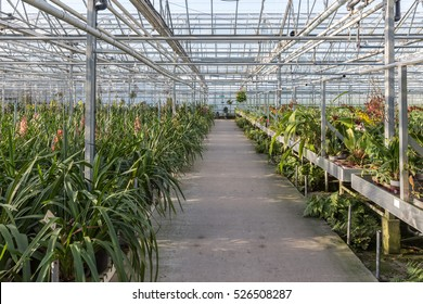 Big Dutch greenhouse with an orchid nursery