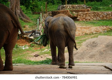 a big elephant in the zoo