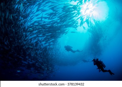 Big eye Trevally Jack, (Caranx sexfasciatus) Forming a polarized school or bait ball. Cabo Pulmo National Park, The world's aquarium. Baja California Sur,Mexico.