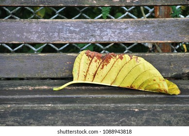 A big fallen leaf on wooden bench