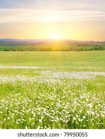 Grosses Blumenfeld bei Sonnenaufgang im Bergtal. Die schöne Blumenvielfalt auf dem grünen Wiese, beleuchtet durch das Sonnenlicht. Ein sonniger Frühlingstag in den Bergen bei Sonnenaufgang.