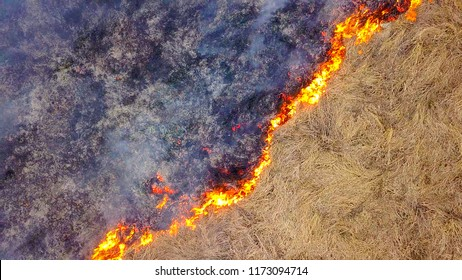 anadrol frass burning)