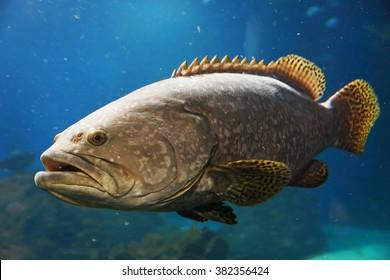 Big fish in blue water