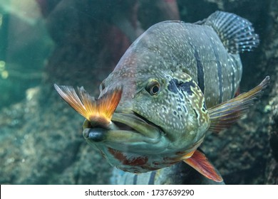 the big fish eat the little one, the powerful instinctively and consistently prey on the weak
