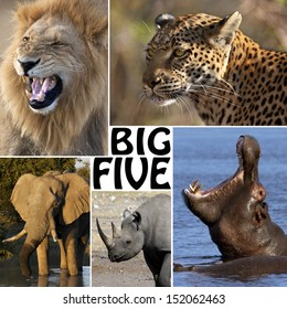 The Big Five - Lion, Elephant, Leopard, Hippopotamus and Rhinoceros.