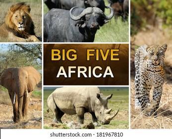 The Big Five - Lion, Elephant, Leopard, Buffalo and Rhinoceros
