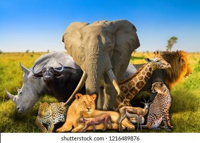 Big Five and wild african animals on savannah nature background. Serengeti wildlife area in Tanzania, Africa. African safari scene landscape. Wallpaper background.