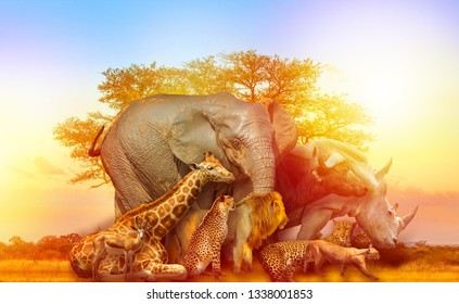 Big Five and wild animals collage with african tree at sunrise in Serengeti wildlife area, Tanzania, East Africa. Africa safari scene in savannah landscape.