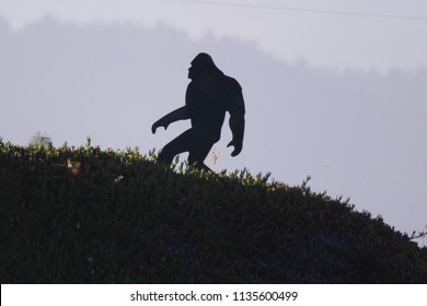 BIG FOOT OR SASQUATCH