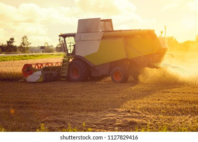 A big forage harvester working on a wheat field during the golden hour of sunset with some crop dust flying from the rear of the machine