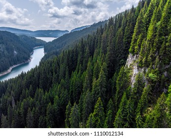 Big forest in Siberia Taiga. Summer forest. taiga siberia russia.  Landscape with forest mountains. Altai, Siberia. High fir on the slopes of the Altai mountains. The harsh Russian landscape. Top view