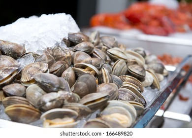 Big fresh clams in the white plate fot dinner, seafood