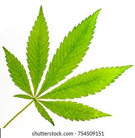 big fresh organic cannabis leaf, marijuana isolated on white background. Green leaf skeleton with some cracked parts against white. Happy life with cannabis leafaa