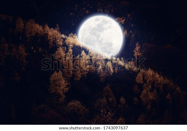 Big full moon in a forest