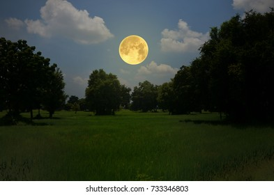 Big full moon over green trees in the field