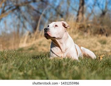 big, fun, rabid dog is playing
