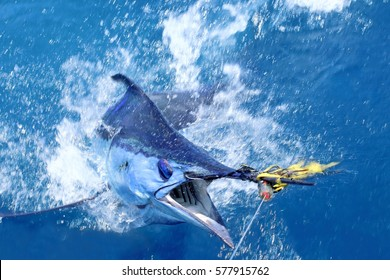 Big game fishing. Marlin on the hook