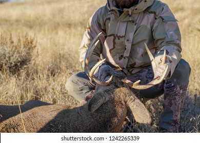 Big game hunter checks out the deer he shot, looking at the antlers. Concept for deer hunting, deer tag, poaching.