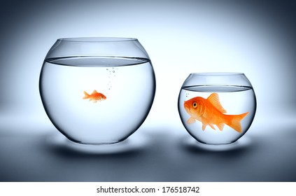 big goldfish in a small aquarium, and reverse - outgrown concept