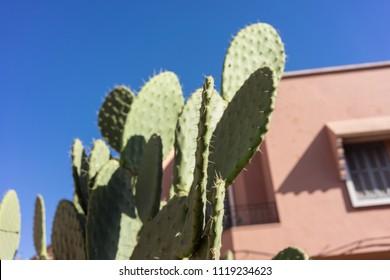big green cactus in front of hosue