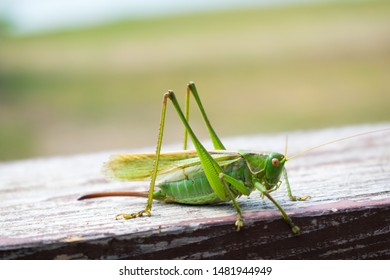 a big green grasshopper looks at me and smiles