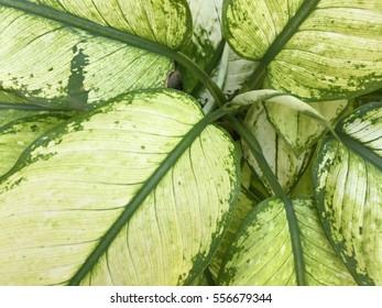 Big green leafs