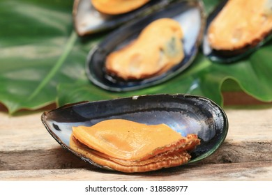 big green mussel