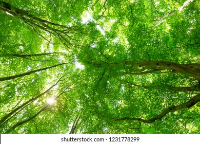Big green tree-tops in the nature