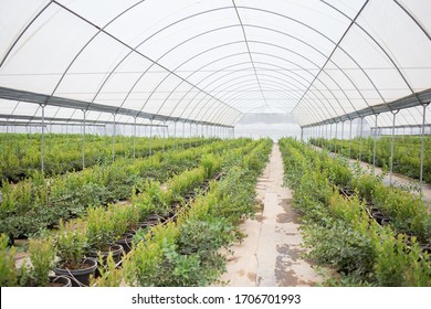 big greenhouse for berries and plants