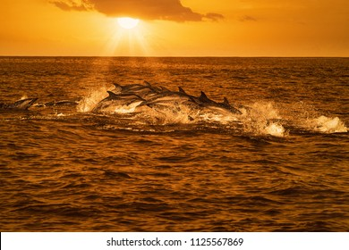Big group of dolphins jumping from the ocean