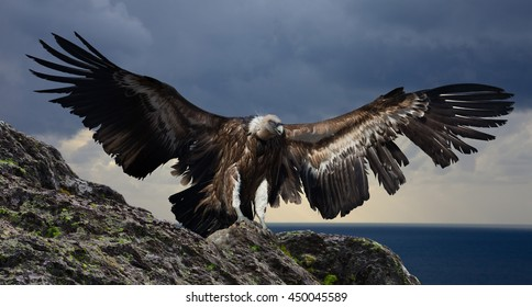 big gyps carnivore bird with opened wings flying with mountings and rocks on background