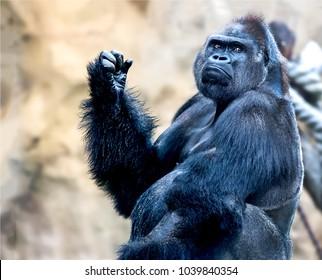 Big hand of King Kong gorilla