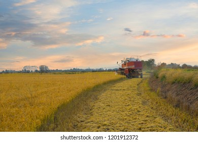 Big harvester machine on a rice field