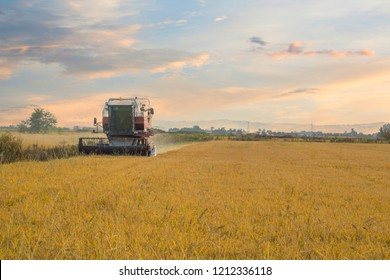 Big harvester machine on a rice field in Piedmont, Vercelli