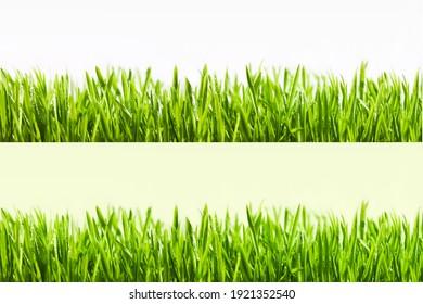 Big horizontal Grass Borders Set