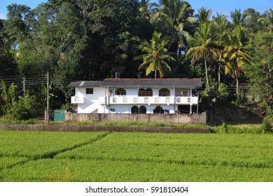 Big house in sri lankan jungle near a rice field