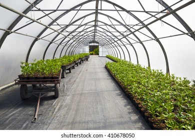 big industrial greenhouse with plant seedlings