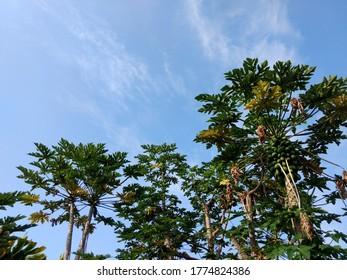 Big Island Palm Trees on the coast