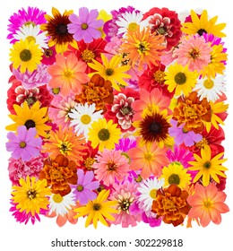 The big isolated square from real summer flowers. It is possible to do the seamless infinite collages and background