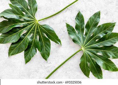 big jungle leafs on light grey background top view