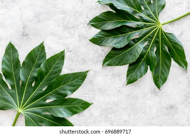 big jungle leaves on light grey background top view
