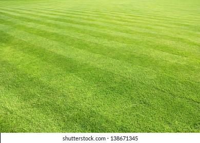 big lawn