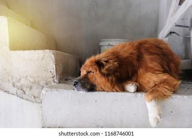 Big lazy dog sleeping on concrete stair.