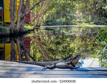 Big Lizard in Byron Bay