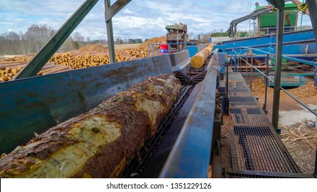 A big log grapple putting the logs one by one to the moving machine in the sawmill industrial factory