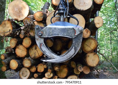 Big machine hanging and holding tree after cutting