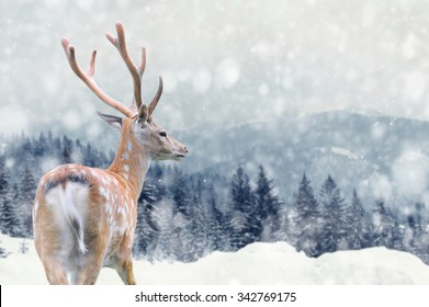 Big male deer on winter mountain backgroundwith snowfalls