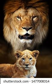 Big male lion and cub portrait on savanna landscape background