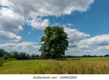 Big Maple Tree in a Sunny Hudson Valley Field