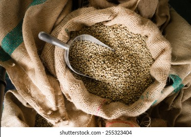 A big metal scoop in the raw coffee seeds sack